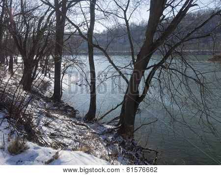 Snow Covered River Shore Landscape with Trees. Blue water with Sunshine and Geese.
