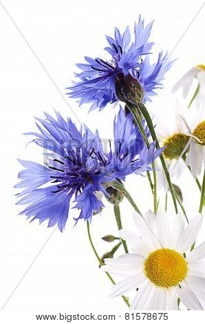 The Beautiful Cornflower And Daisy Isolated