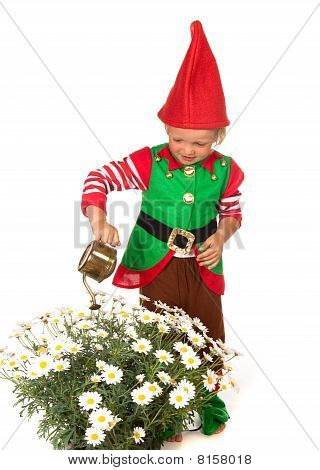 Garden Gnome Boy With Daisies
