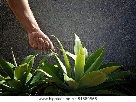 Testing plants