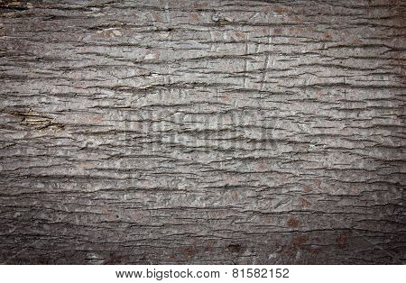 Background of round palm tree bark blurred black