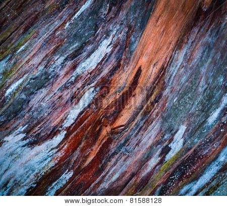 Colorful The Rotten Wood