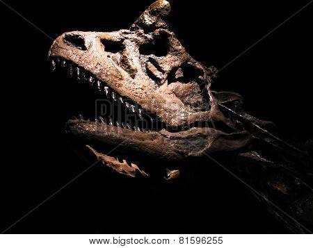 Dinosaur/tyrannosaurus