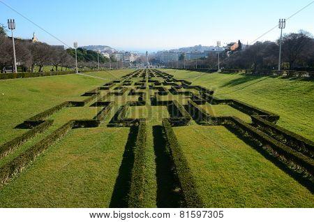 Ornamental Hedge