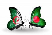Постер, плакат: Two Butterflies With Flags On Wings As Symbol Of Relations Algeria And Bangladesh