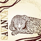 picture of leopard  - Vector illustration with hand drawn portrait of leopard - JPG