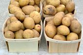 image of solanum tuberosum  - organic potato with crate isolate at market place