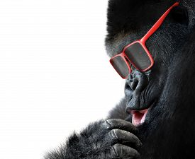 foto of cute animal face  - Funny animal portrait of a big gorilla wearing hipster sunglasses - JPG