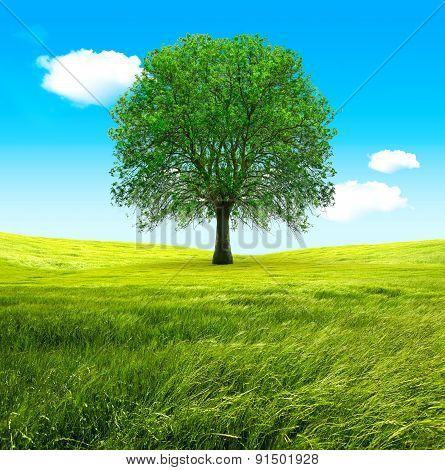 Big tree and green fields