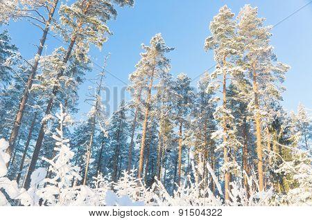 Frosty Glow Icy Forest