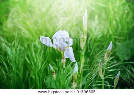 flower on green background