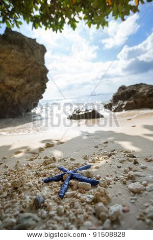 Blue Starfish on Philippine beach