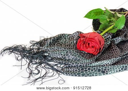 Red Rose Laing On Black Silk Scarf On White Background