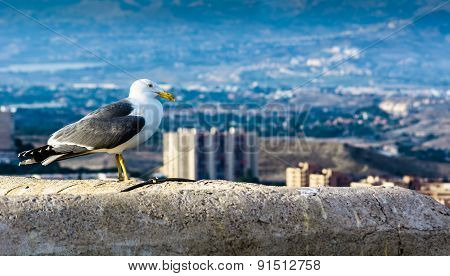 Real Seagull Standing