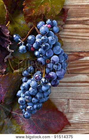 Blue Grape