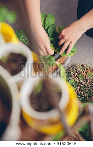 Woman hands gardening in a urban orchard