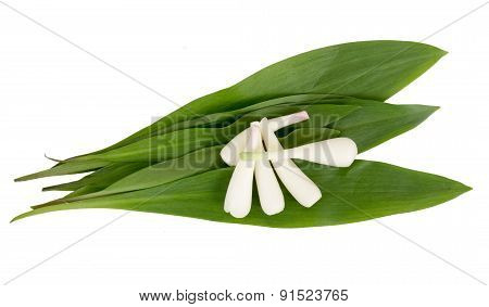 wild garlic Allium ursinum over white background