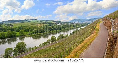 Path Through Vineyards At Mosel River