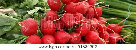 Red Bunch Of Radish