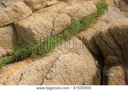 rocks and grass 1
