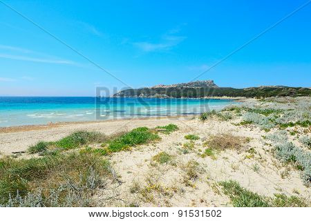 Plants And Sand In Capo Testa