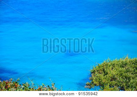 Pine Tree By Capo Testa Blue Water