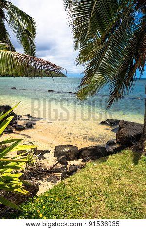 Coconut tree, Maui, Hawaii