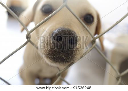 Puppy Sad Cute Nose Closeup And Fence
