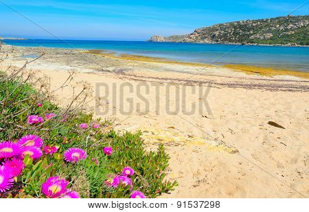 Pink Flowers And Blue Sea