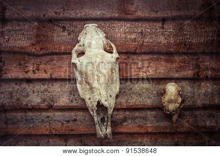 Horse And Deer Skull