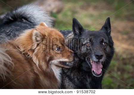 Two Funny Dogs