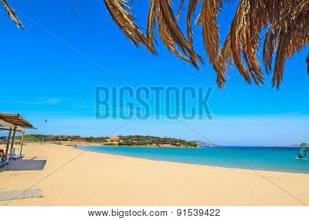 Palm Branches By The Shore In Porto Pollo