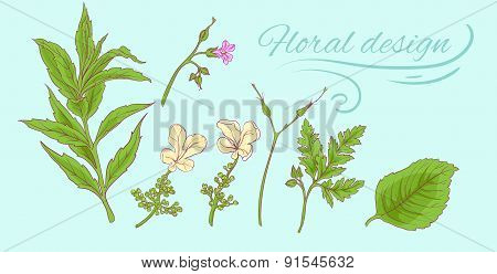 floral elements of branches with leaves 2