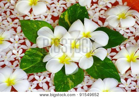 Beautiful flowers floating in water
