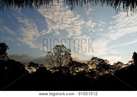 Silhouette of trees in the amazon rainforest against blue sky, Yasuni National Park, Ecuador