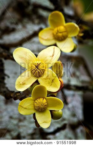 Close up shot of yellow flowers in the amazon rainforest, Ecuador