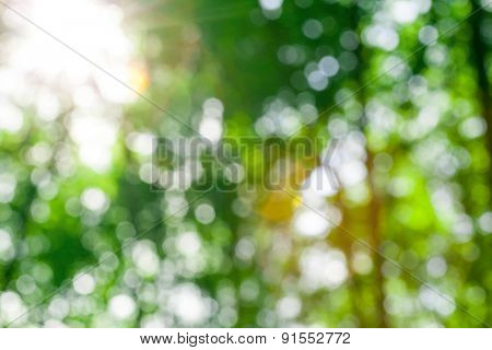 Natural blur abstract background with selective focus