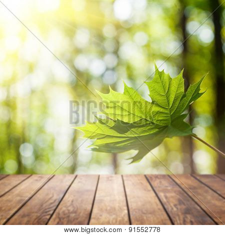Beautiful sunlight liaf in the spring forest with wood planks floor interior background