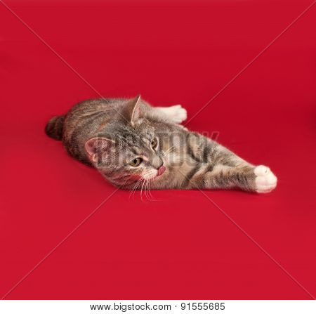 Tricolor Striped Cat Lies On Red