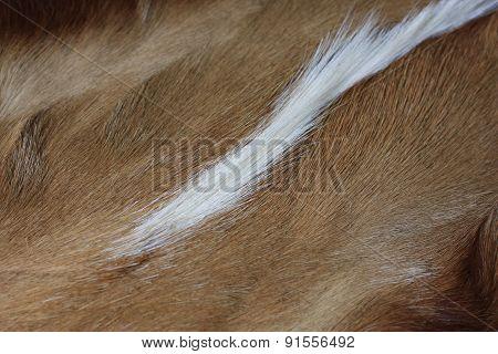 Coarse Fur