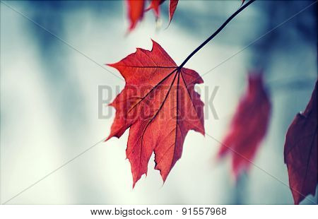 Retro styled background with autumn leaf