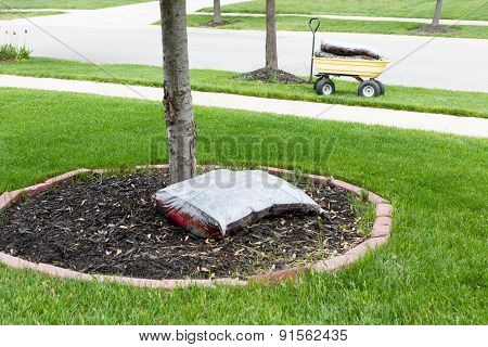 Mulching Around The Trunk Of A Tree