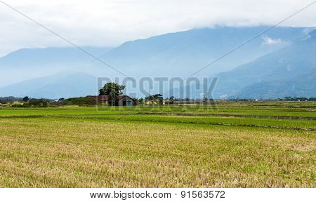 Paddy Rice field after cultivation