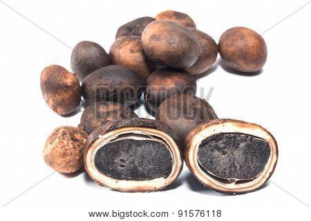 the Mushroom - Barometer Earthstars