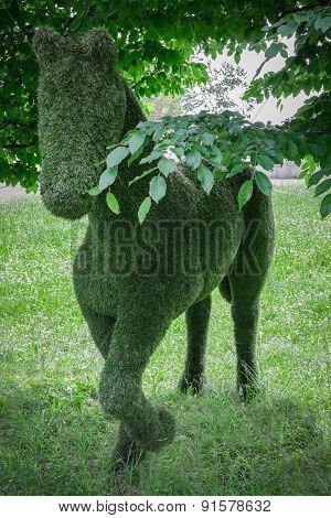 Horse Hedge