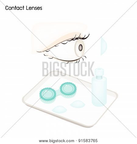 Contact Lenses, Storage Case And Solution Bottle