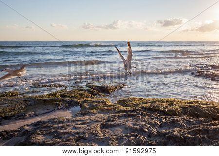 Seagulls on coastline of Mallorca, Spain