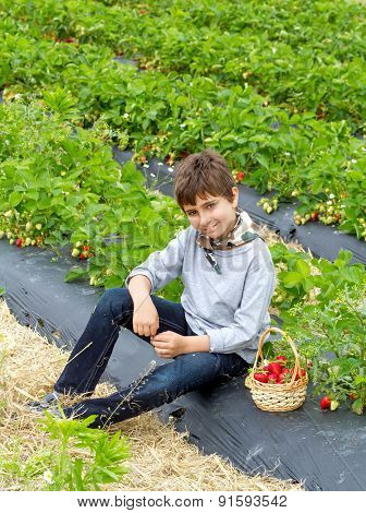 Boy with harvest of strawberries in a basket on the field