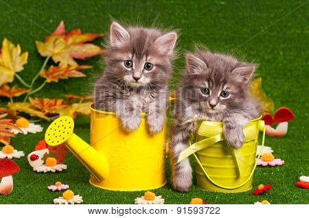 Cute gray kittens with yellow watering can on artificial green grass