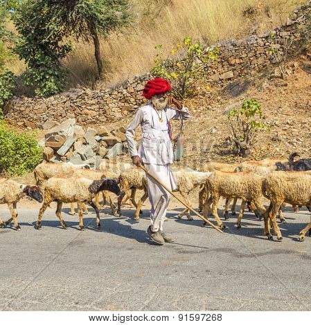 A Rajasthani Tribal Goatherd Wearing Traditional Colorful Red Turban  Protects The Goats